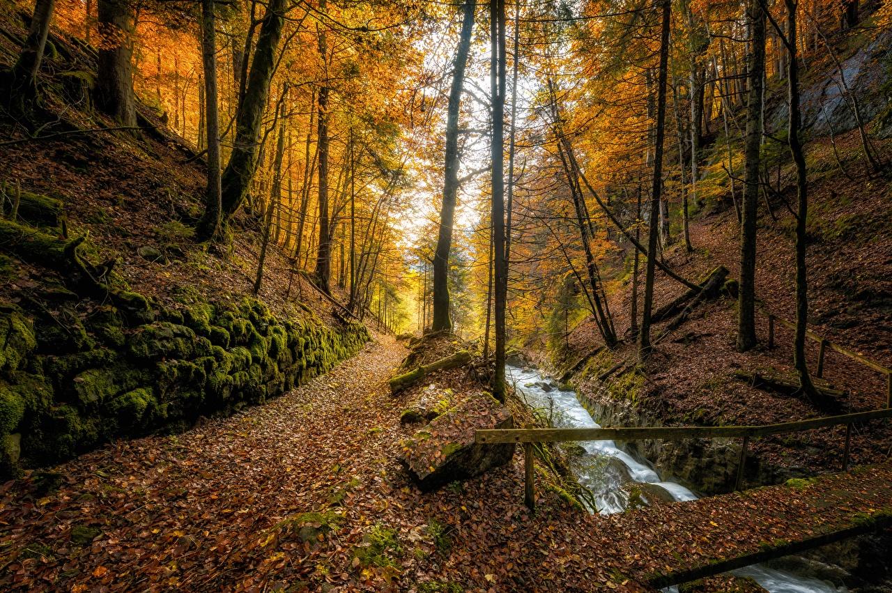 Картинки Листья Швейцария Осень Ручей Природа Леса дерево лист Листва ручеек осенние лес дерева Деревья деревьев