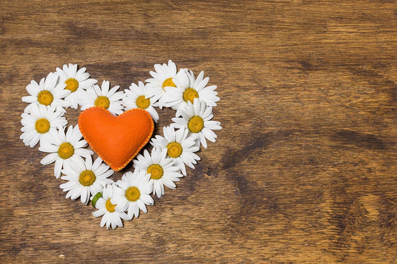 Картинки День всех влюблённых Сердце Цветы Ромашки Шаблон поздравительной открытки День святого Валентина серце сердца сердечко цветок ромашка