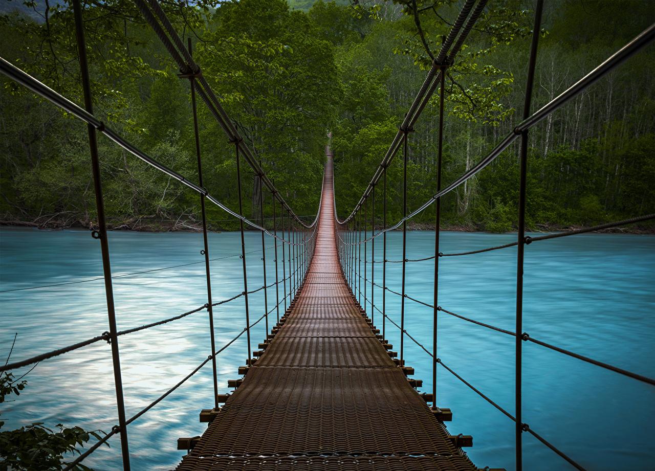 Картинка Мосты Природа Леса Реки речка