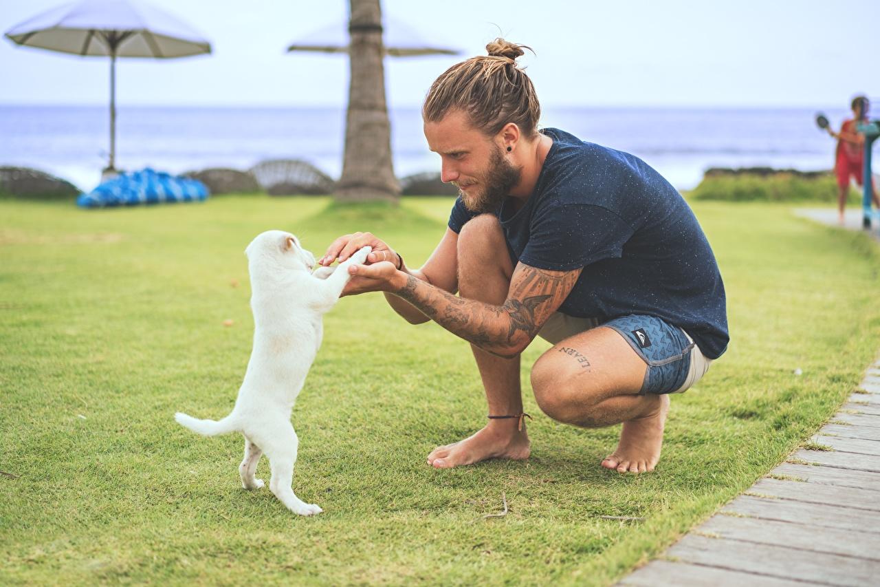 Фотографии Щенок тату Собаки Мужчины Газон Животные Татуировки