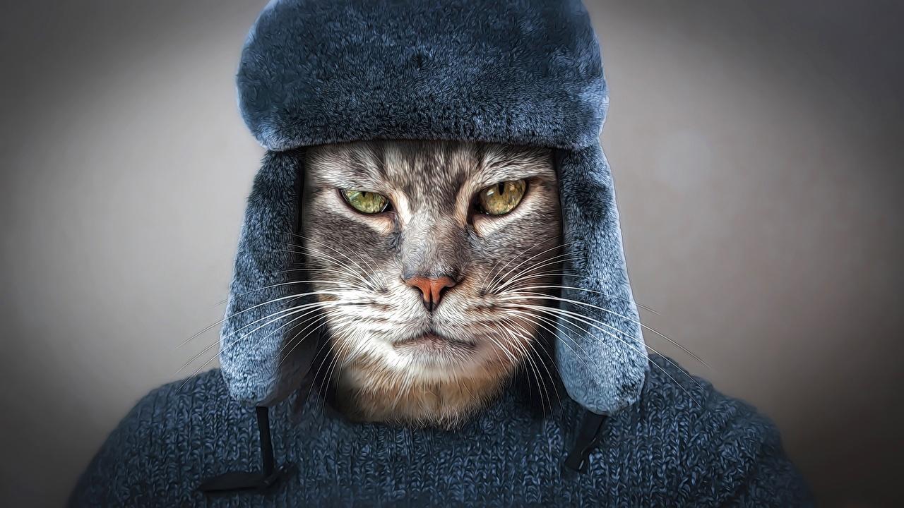 Фото Кошки Русские Хмурость шапка Усы Вибриссы Морда смотрит Животные кот коты кошка российские Недовольство Шапки в шапке морды Взгляд смотрят животное