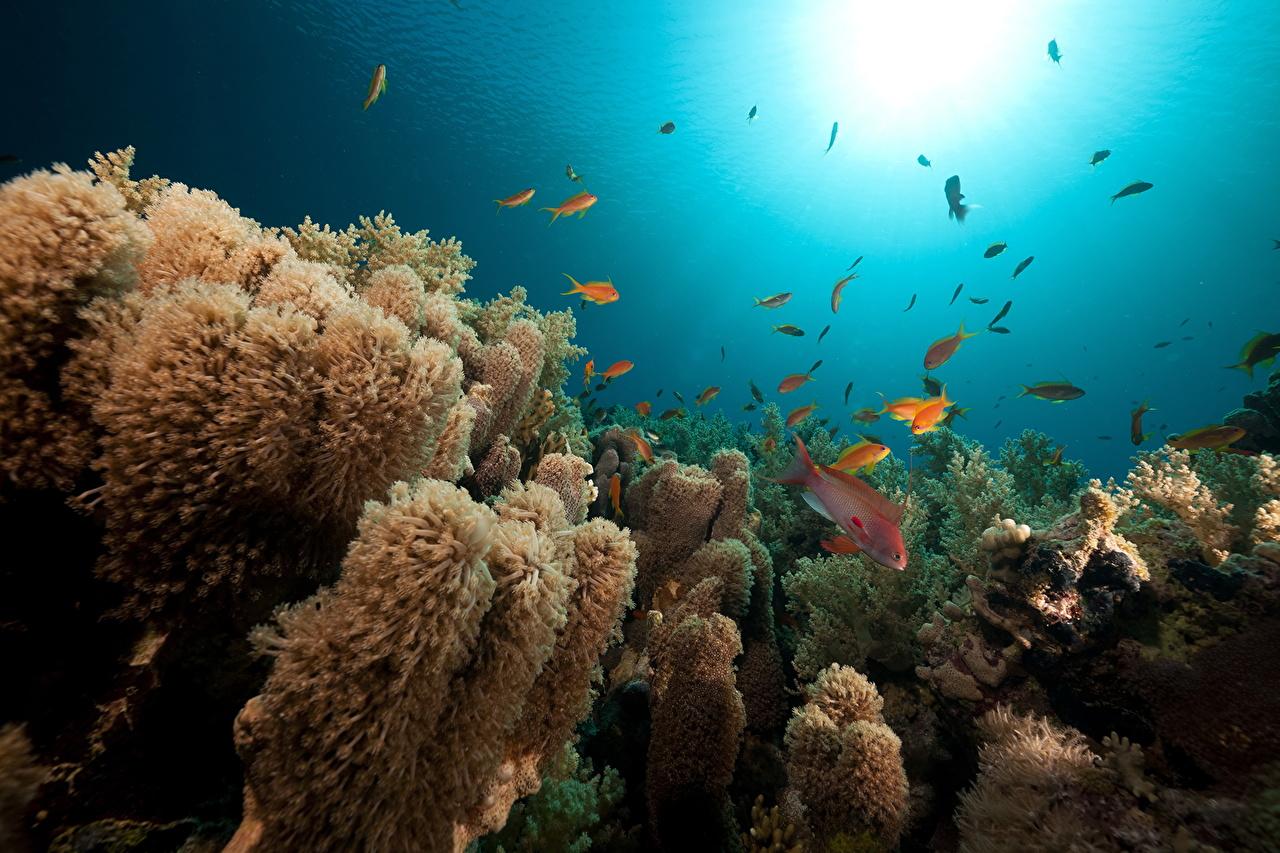 Фото Рыбы Подводный мир Кораллы Море Природа