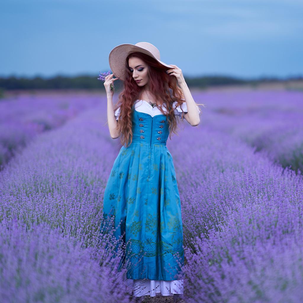 Фотографии Размытый фон Поза Шляпа девушка Поля Лаванда Платье боке позирует шляпы шляпе Девушки молодая женщина молодые женщины платья