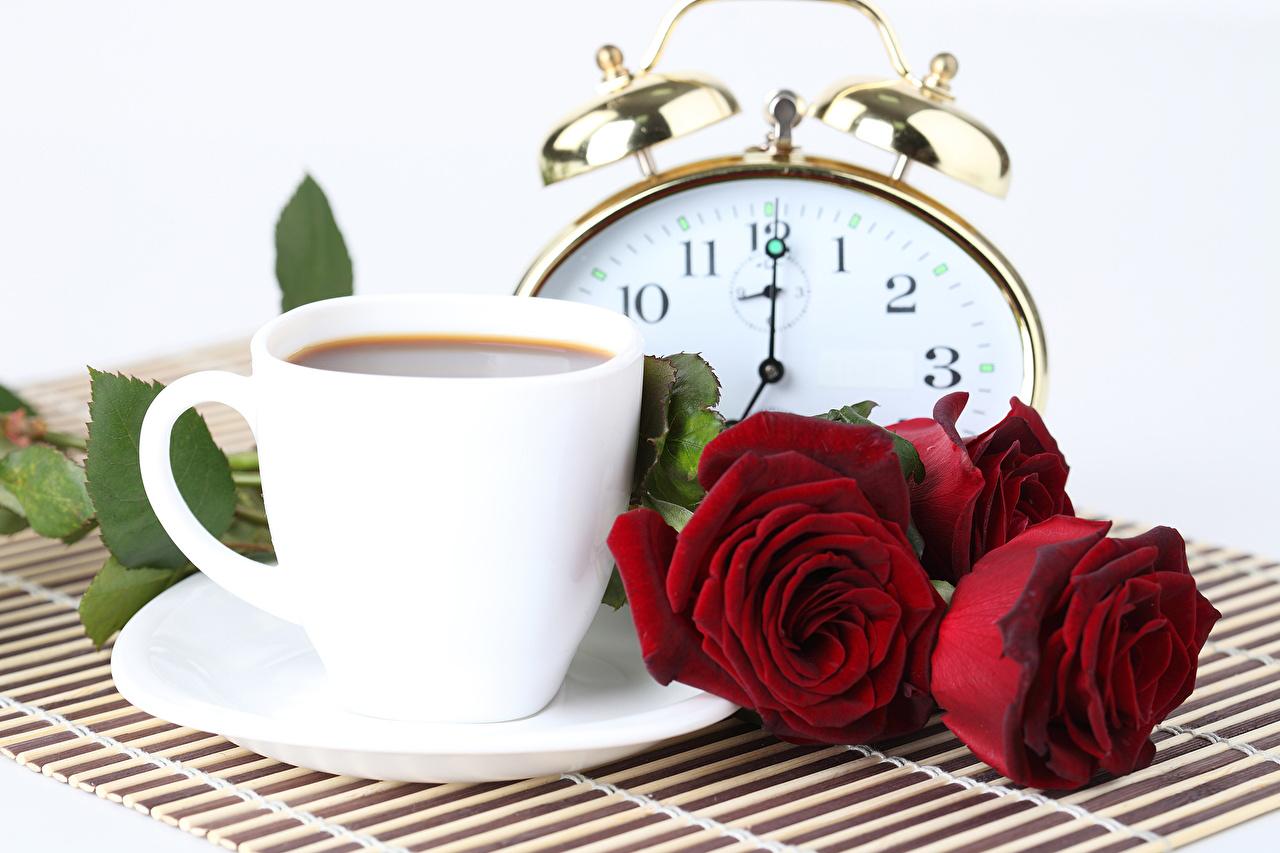 Фото Часы Розы Кофе красные Цветы чашке Продукты питания Белый фон роза красных красная Красный цветок Еда Пища Чашка белом фоне белым фоном