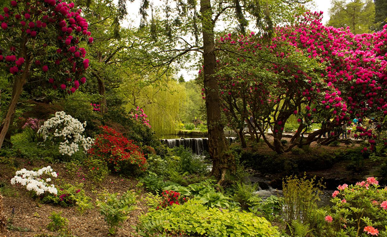 Картинка Великобритания Bodnant Garden Природа Сады кустов деревьев Кусты дерево дерева Деревья