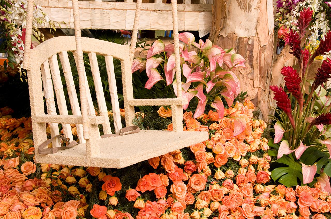 Обои для рабочего стола роза Каллы Цветы Скамья Розы белокрыльник цветок Скамейка
