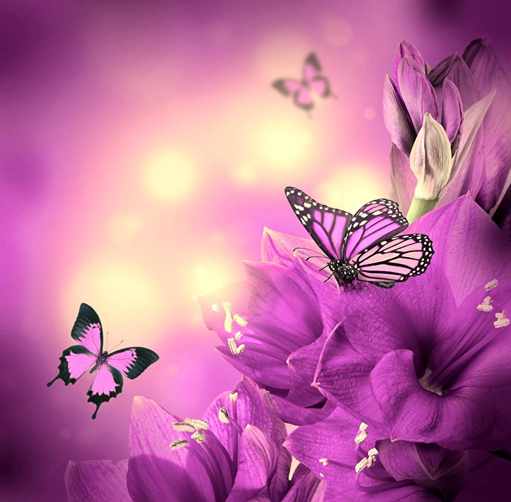 Фотография Бабочки насекомое Животные бабочка Насекомые животное