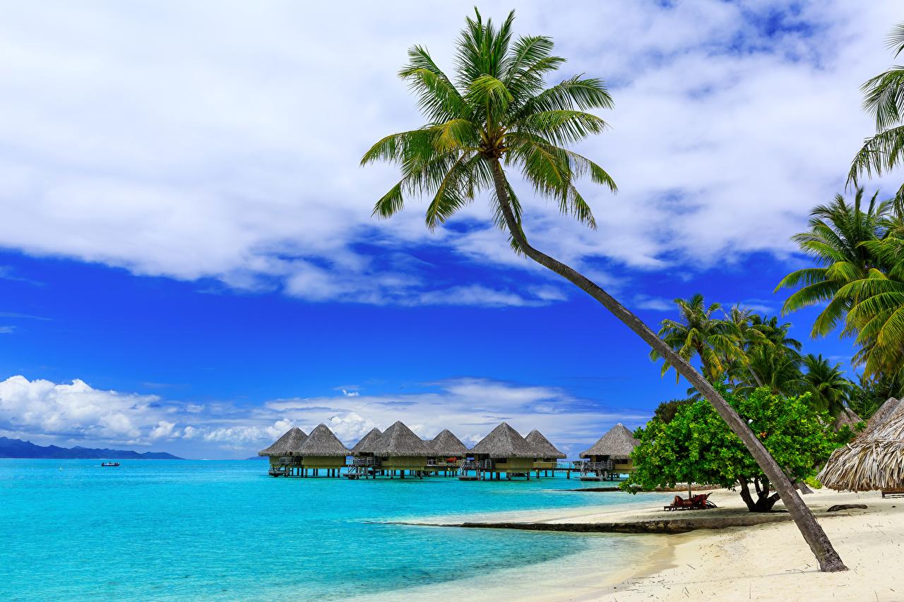 Обои Бора-Бора Французская Полинезия Бунгало Природа Небо Пальмы Тропики берег Побережье