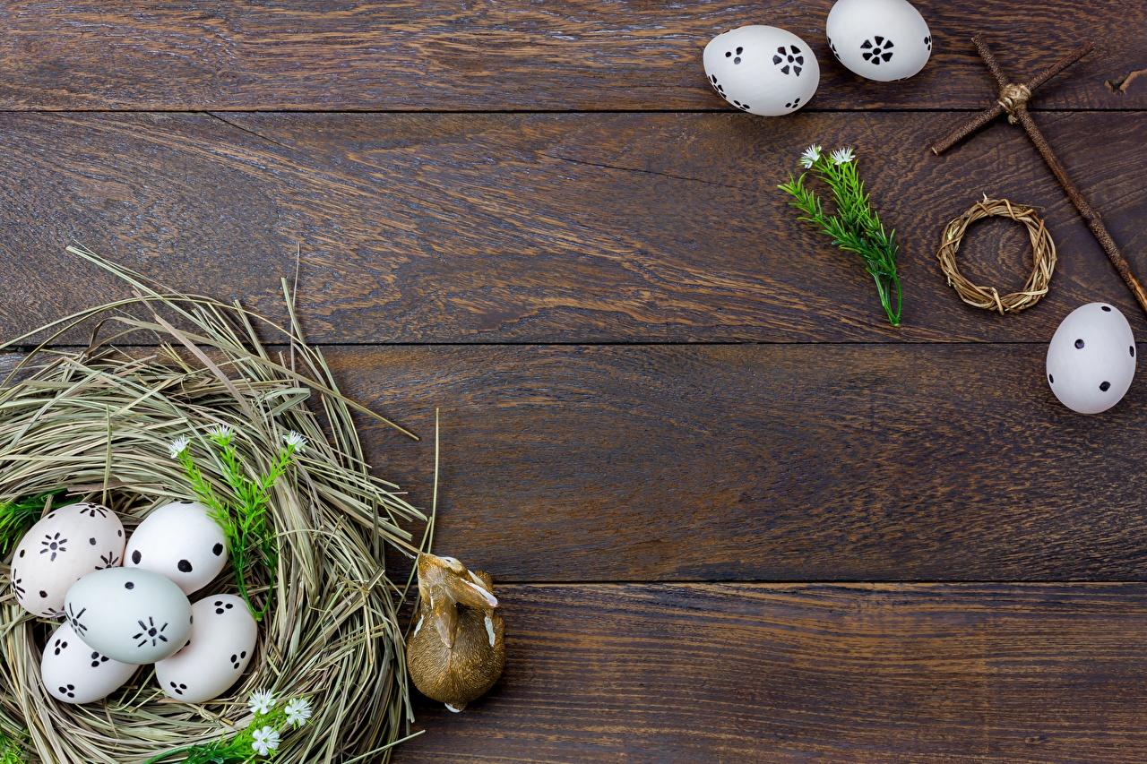 Картинки Пасха яйцо гнезда Шаблон поздравительной открытки Доски яиц Яйца яйцами Гнездо гнезде