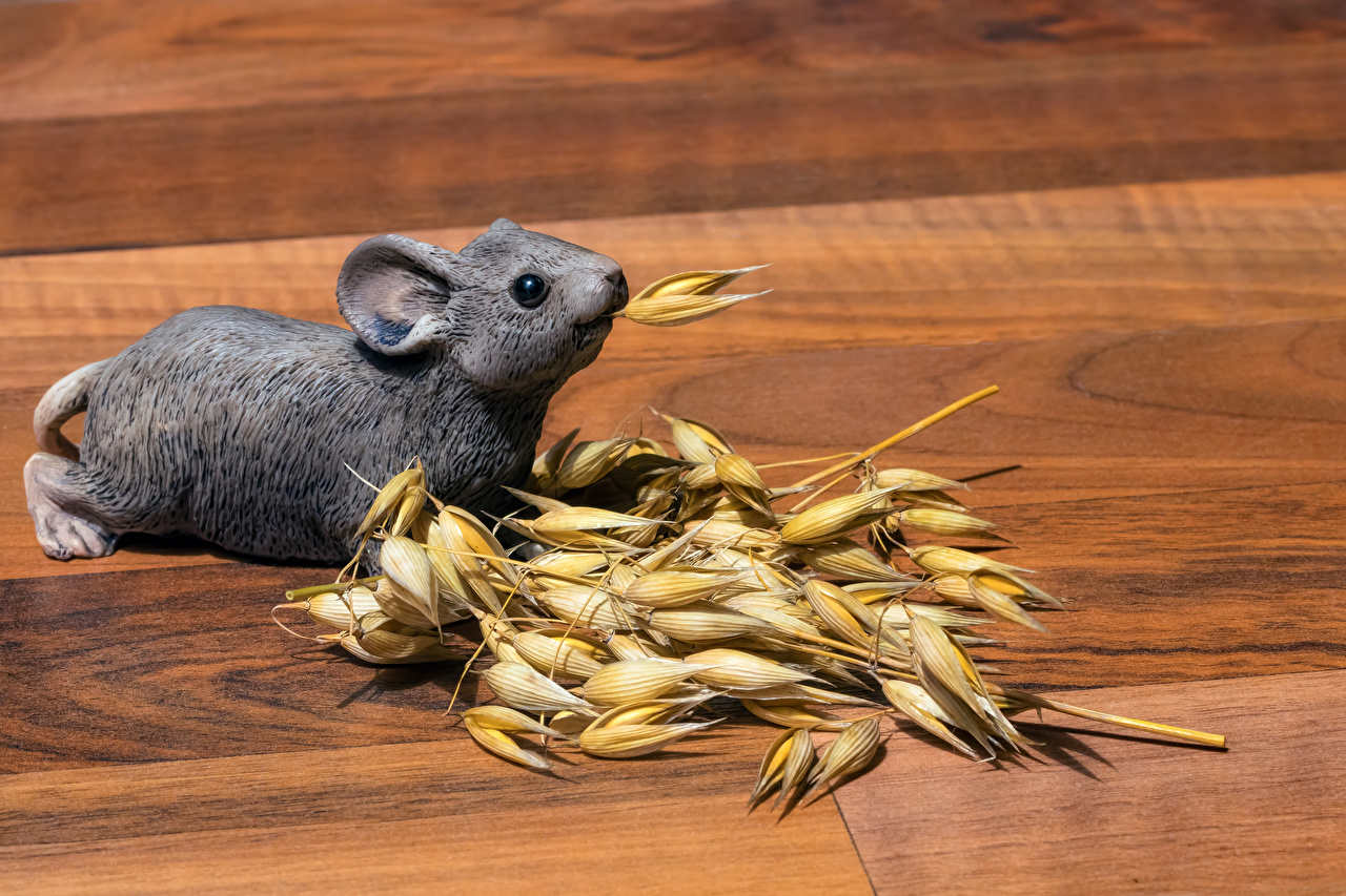Картинки Мыши Колос животное Доски колосья колоски колосок Животные