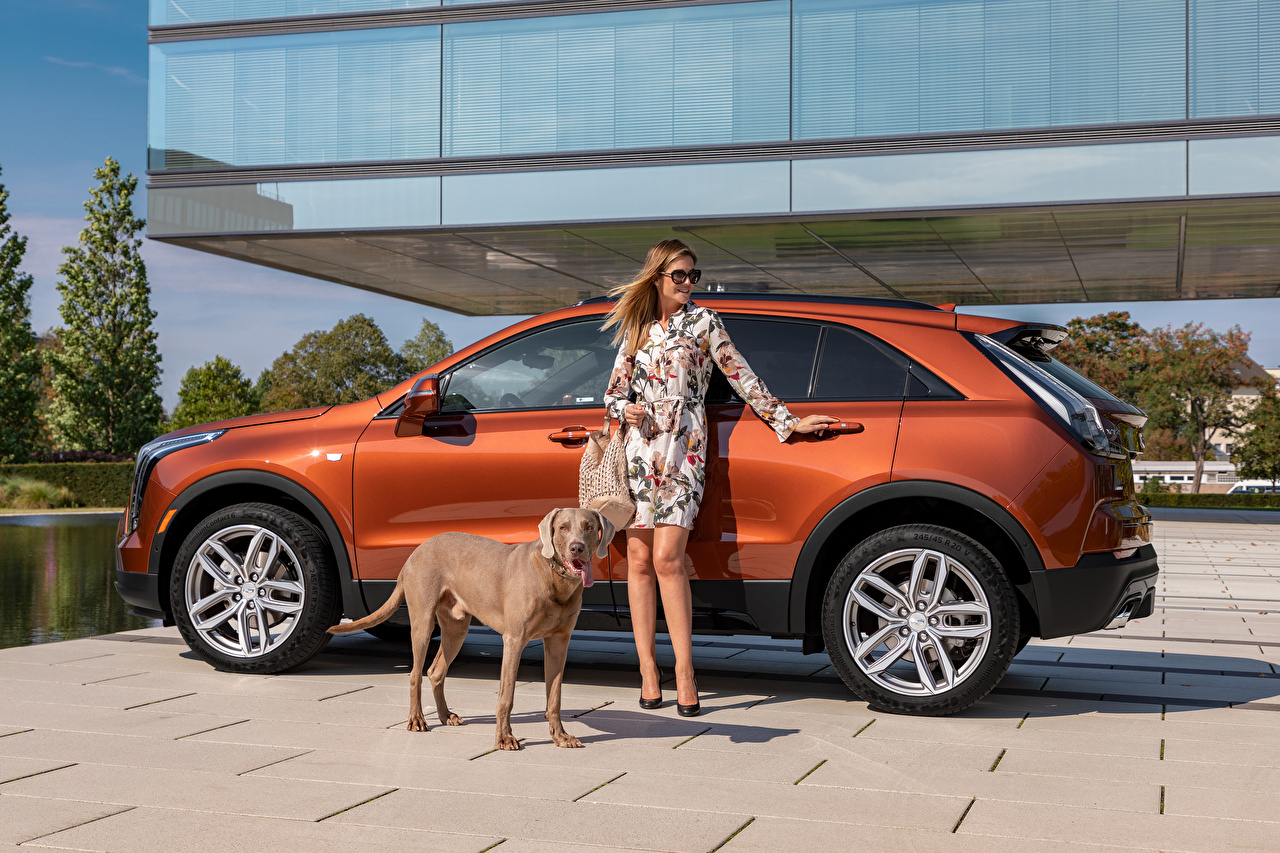 Фотография Cadillac собака Кроссовер XT4 350D, Launch Edition Sport, 2020 Девушки Сбоку Металлик Автомобили Животные Кадиллак Собаки CUV девушка молодая женщина молодые женщины авто машины машина автомобиль животное