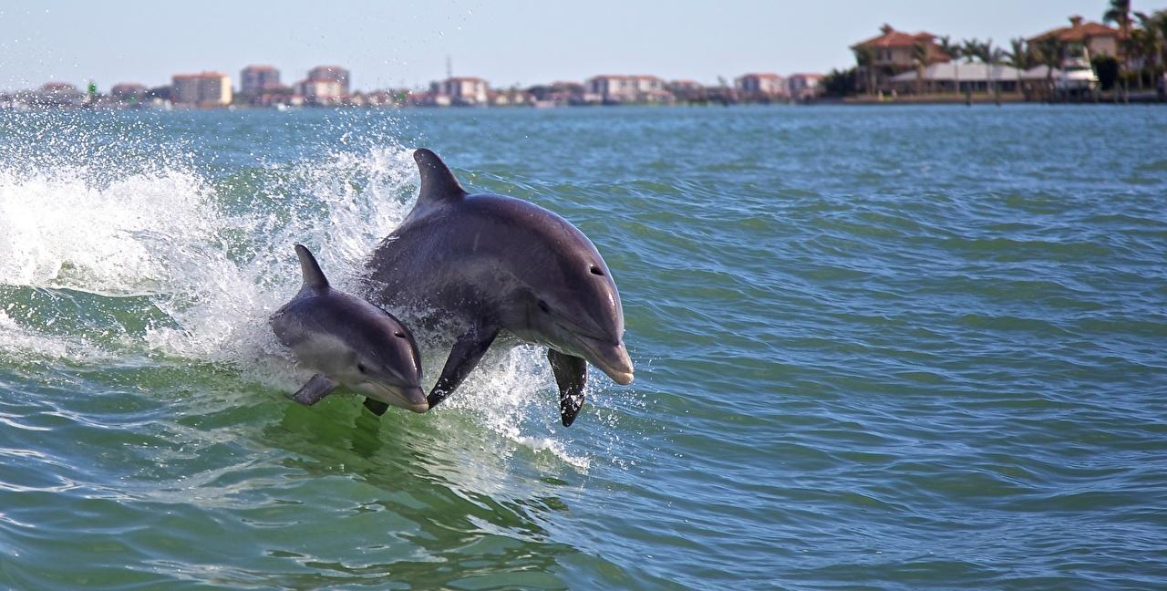 Фотографии Животные Дельфины Двое с брызгами Вода Плывет животное 2 два две вдвоем Брызги воде плывут плавает плавают плывущий плавающий