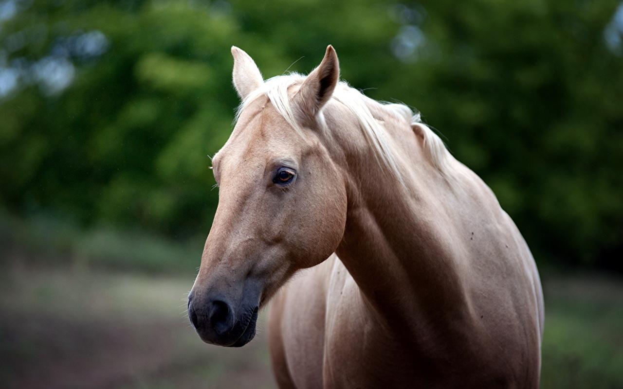 В снах людей, общающихся с потусторонним миром – лошадь может символизировать инкуба или суккуба.