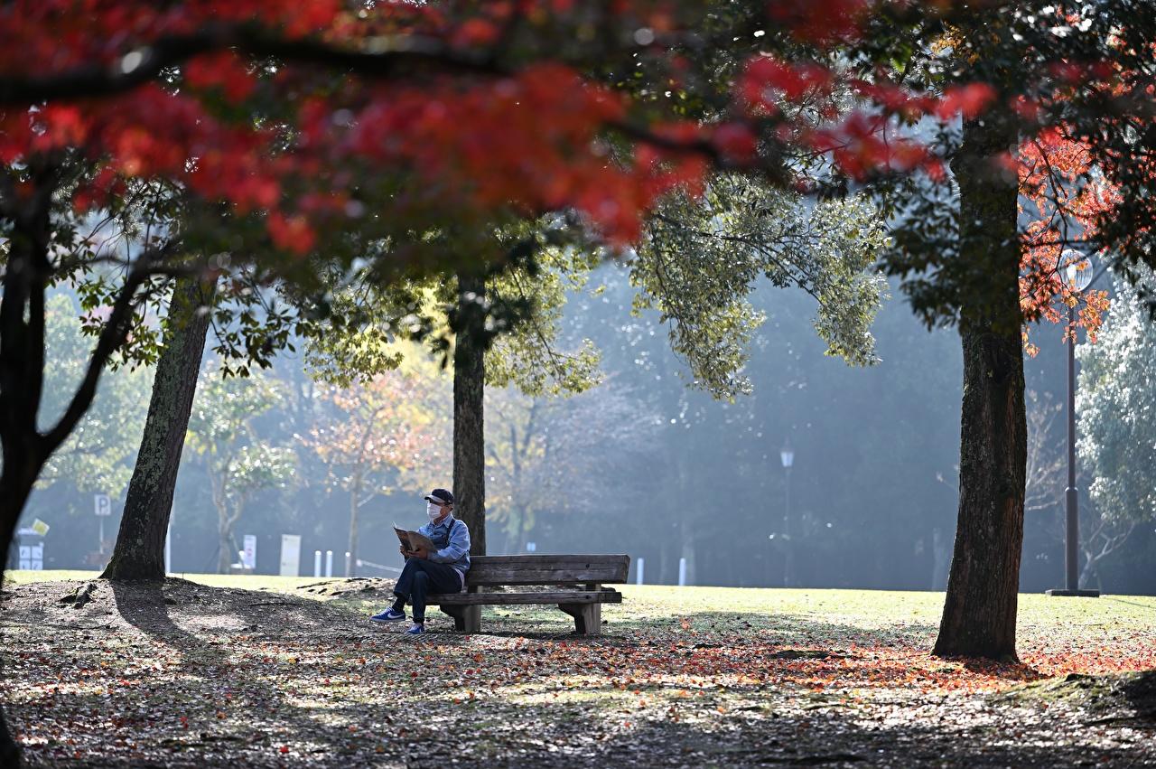 Фотографии Коронавирус Отдых осенние Природа Парки Сидит Скамья Деревья Осень релакс отдыхает парк сидя сидящие Скамейка дерево дерева деревьев