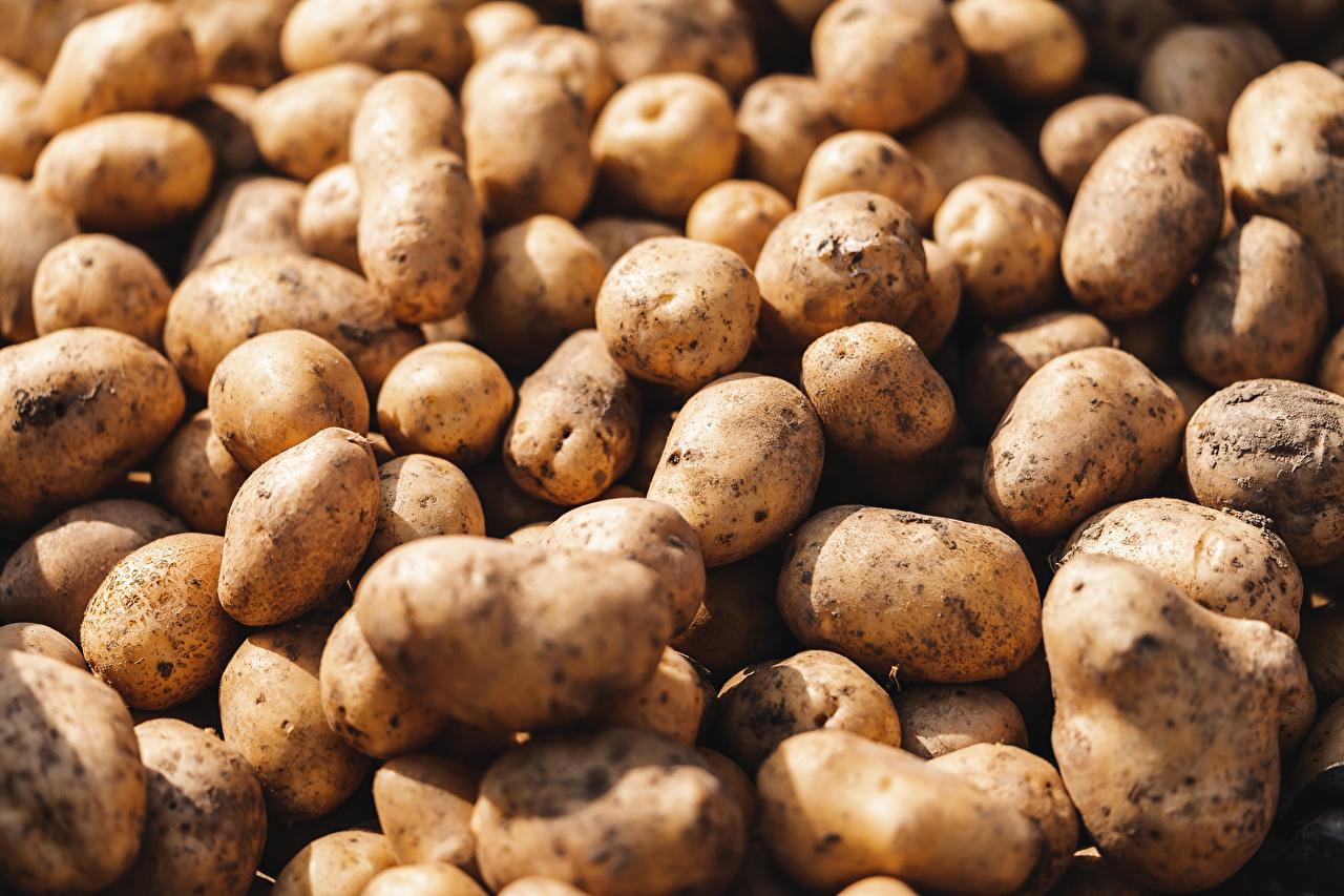 Обои для рабочего стола Картофель Пища Много вблизи картошка Еда Продукты питания Крупным планом