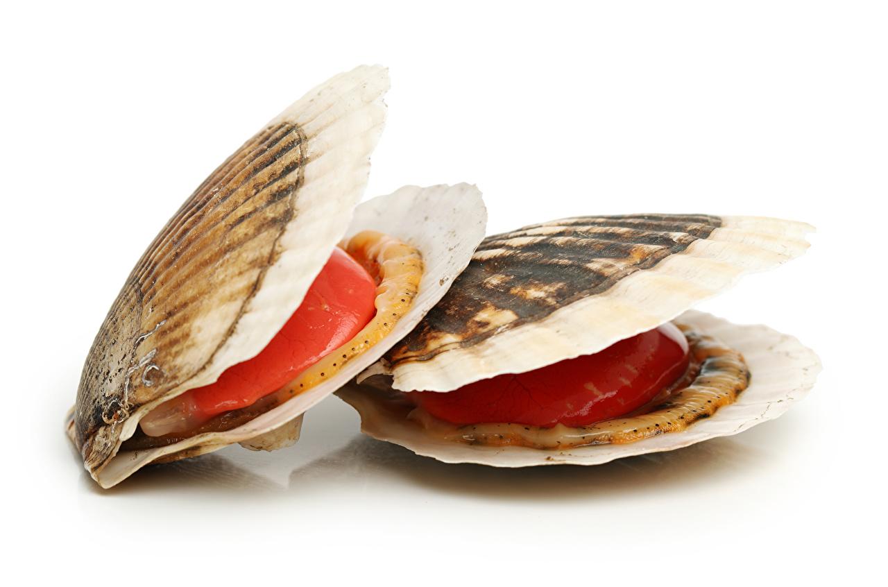 Обои для рабочего стола Ракушки Еда Морепродукты Пища Продукты питания