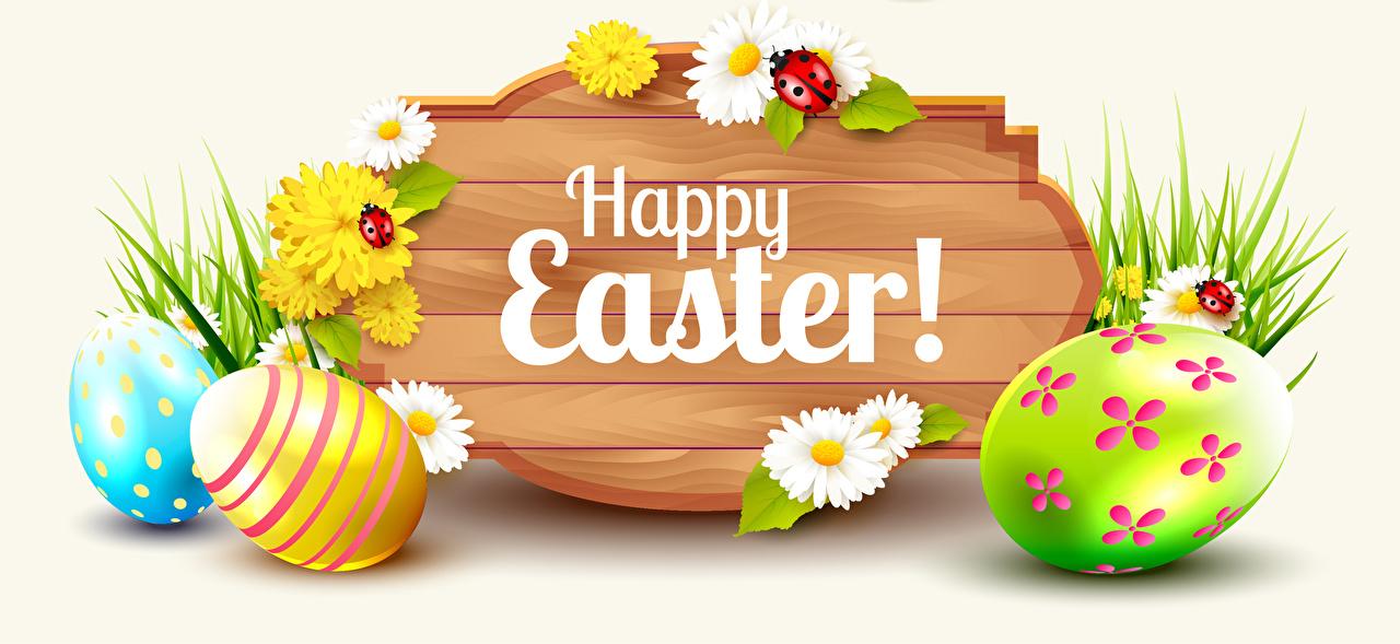 Картинка Пасха Божьи коровки Английский яиц цветок Ромашки Одуванчики Белый фон инглийские английская яйцо Яйца яйцами Цветы ромашка белом фоне белым фоном