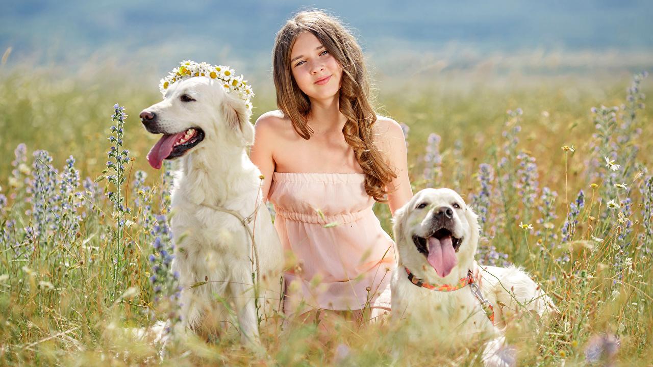 Фотографии Девочки Ретривер Собаки Дети Двое Язык (анатомия) Поля Взгляд Животные Ребёнок 2 вдвоем смотрит