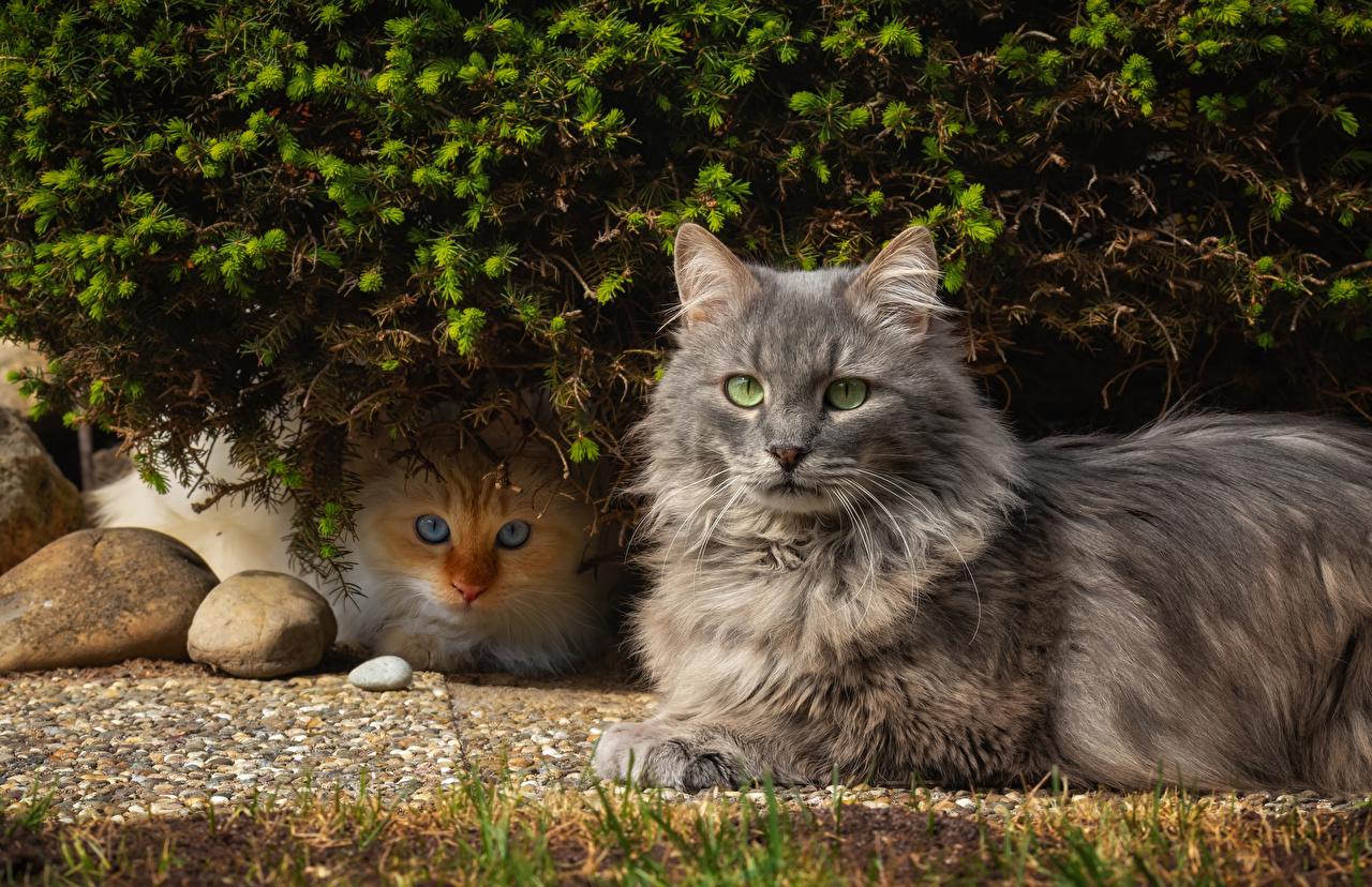Фотография кошка Двое смотрит животное кот коты Кошки 2 два две вдвоем Взгляд смотрят Животные