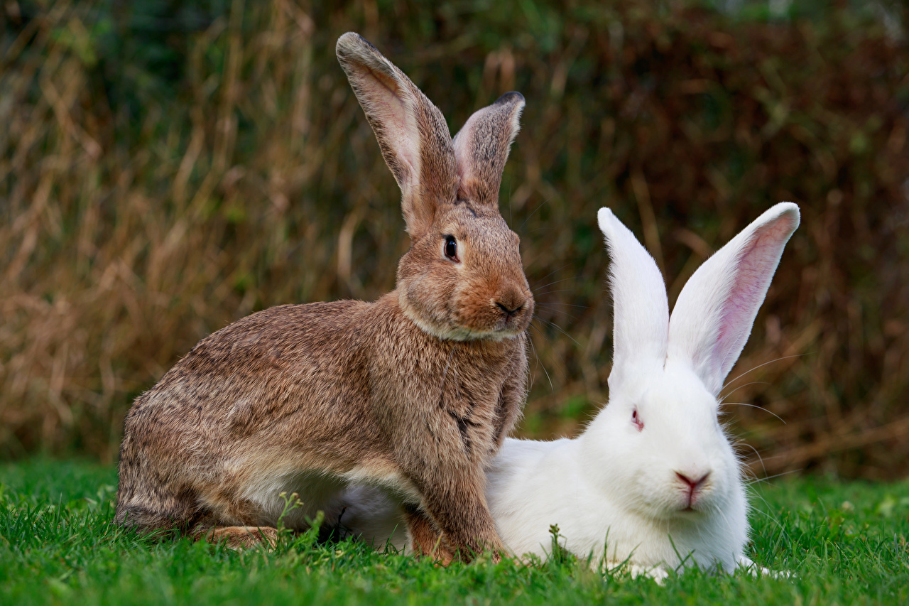 Картинка Кролики Двое Животные 2 два две вдвоем животное