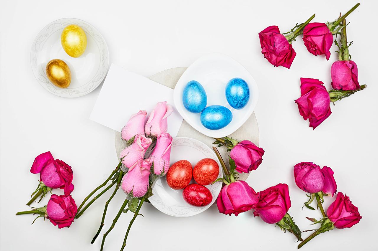 Фотографии Пасха Разноцветные Яйца роза цветок Пища Тарелка сером фоне яиц яйцо яйцами Розы Цветы Еда тарелке Продукты питания Серый фон