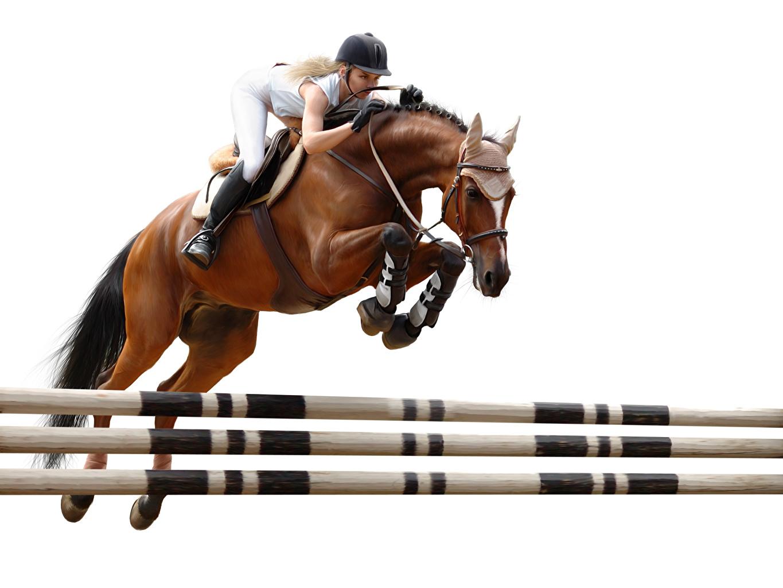 Фотография Лошади шлема спортивная Конный спорт молодая женщина Прыжок Белый фон лошадь Шлем в шлеме Спорт девушка Девушки спортивные спортивный верховая езда молодые женщины прыгает прыгать в прыжке белом фоне белым фоном