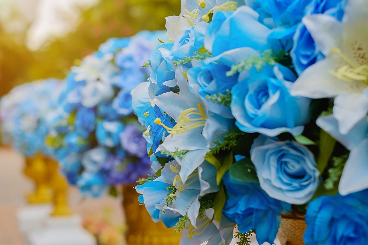 Картинка Розы голубая цветок роза голубых Голубой голубые Цветы