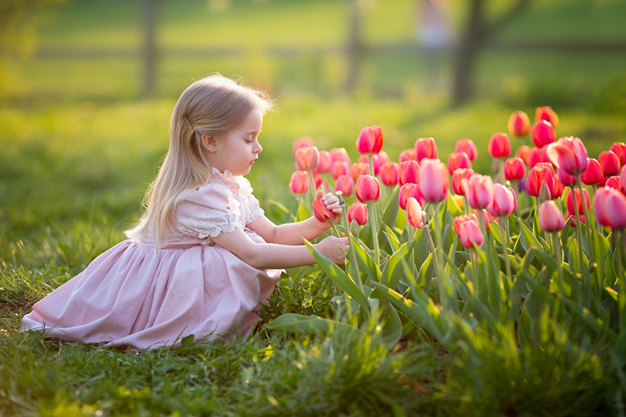 Фотографии Девочки Блондинка Дети Тюльпаны Платье Ребёнок