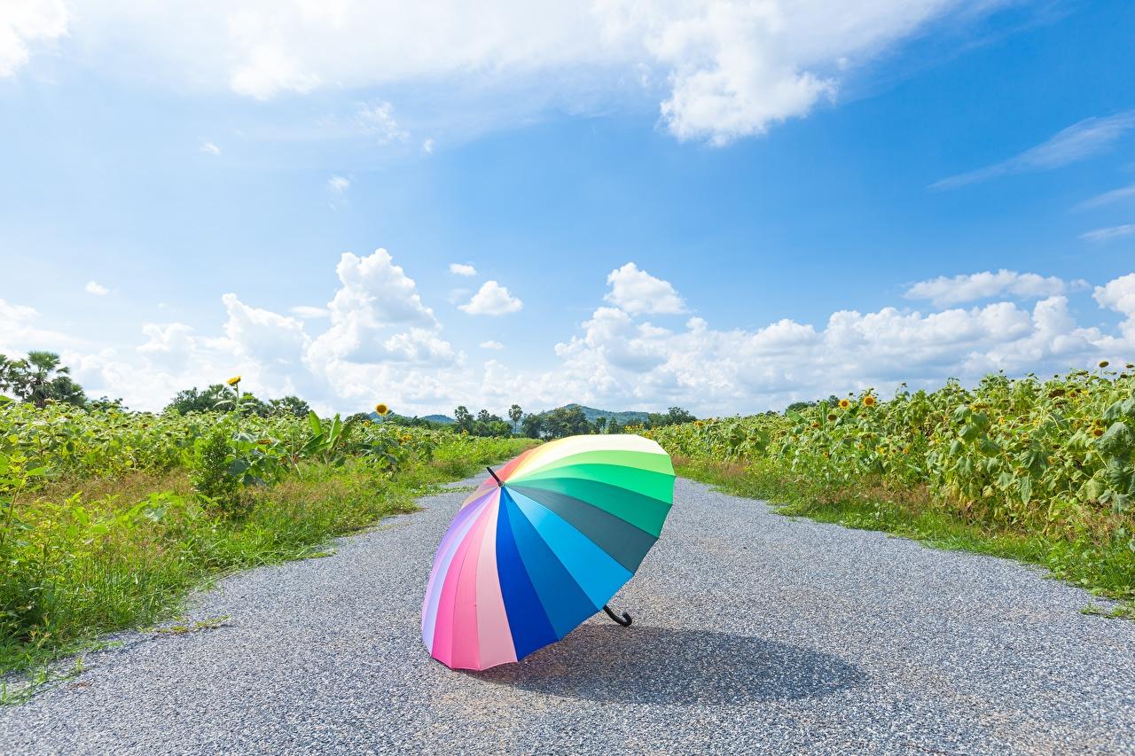Картинка радуги Природа Небо Зонт асфальта Радуга зонтом зонтик Асфальт