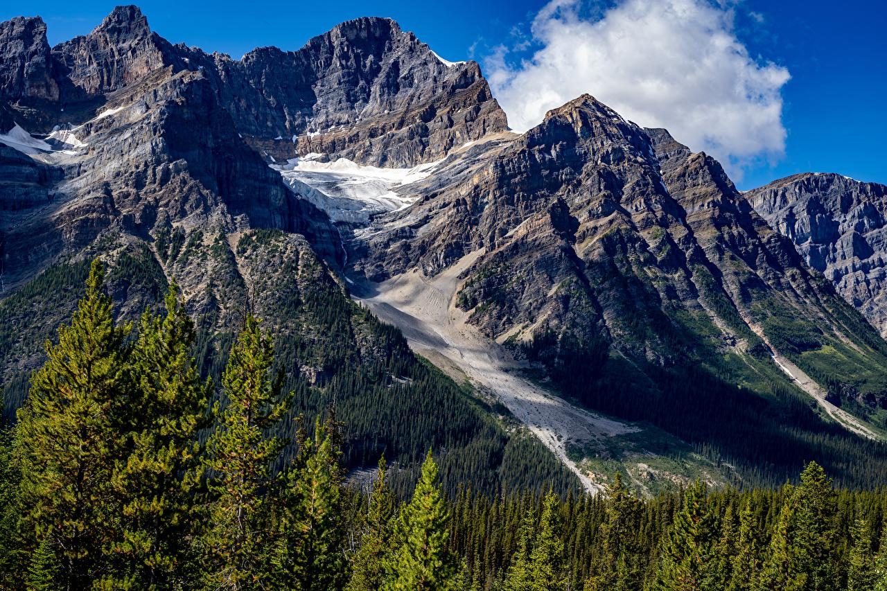 Фотография Банф Канада Горы Природа лес парк мха гора Леса Парки Мох мхом