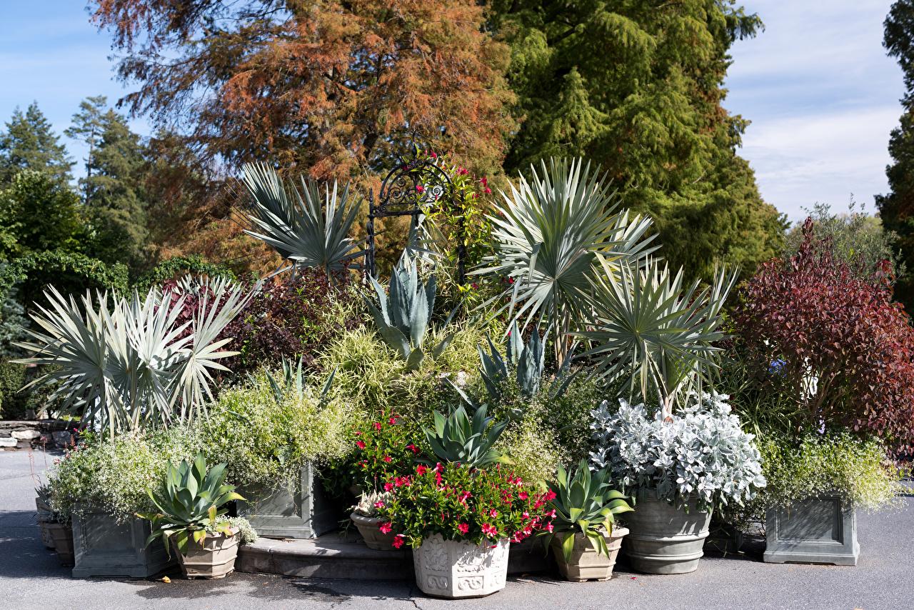 Обои для рабочего стола штаты Nemours Mansion and Gardens Природа Сады Кусты США кустов