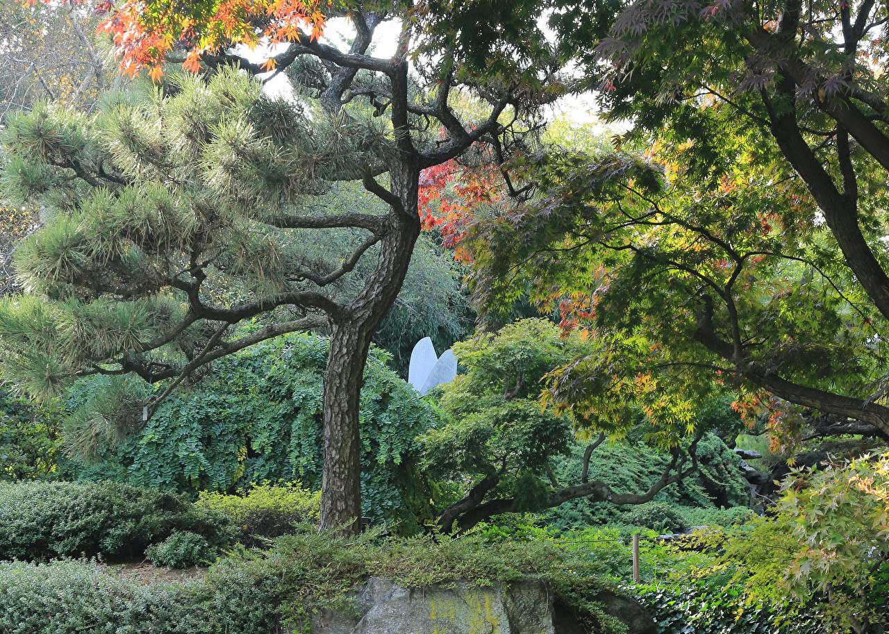 Фотография США Brooklyn Botanical Garden Природа Парки Кусты Деревья штаты