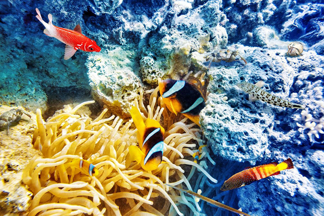 Картинки Рыбы Подводный мир Кораллы Животные животное