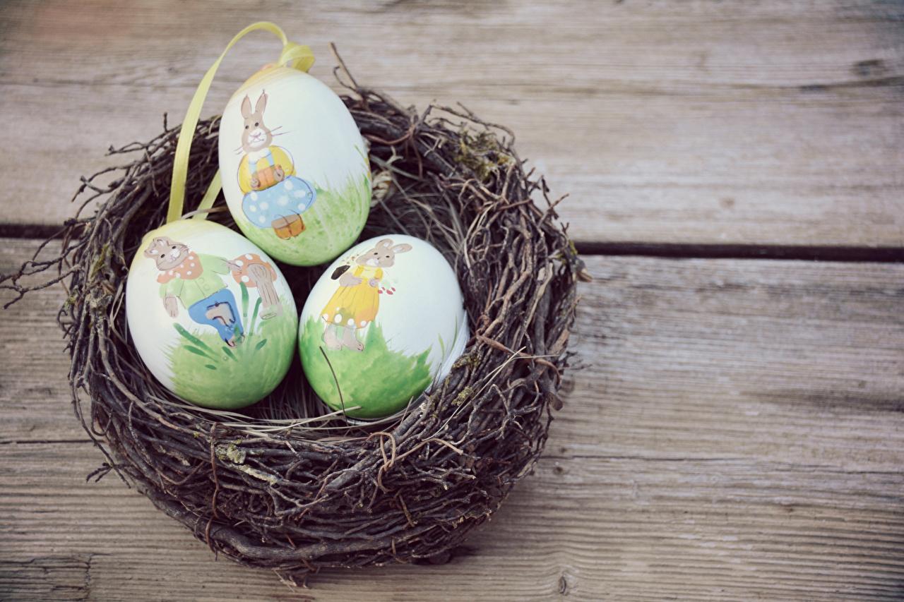 Фотографии Пасха яйцо Гнездо Праздники Доски дизайна яиц Яйца яйцами гнезде гнезда Дизайн