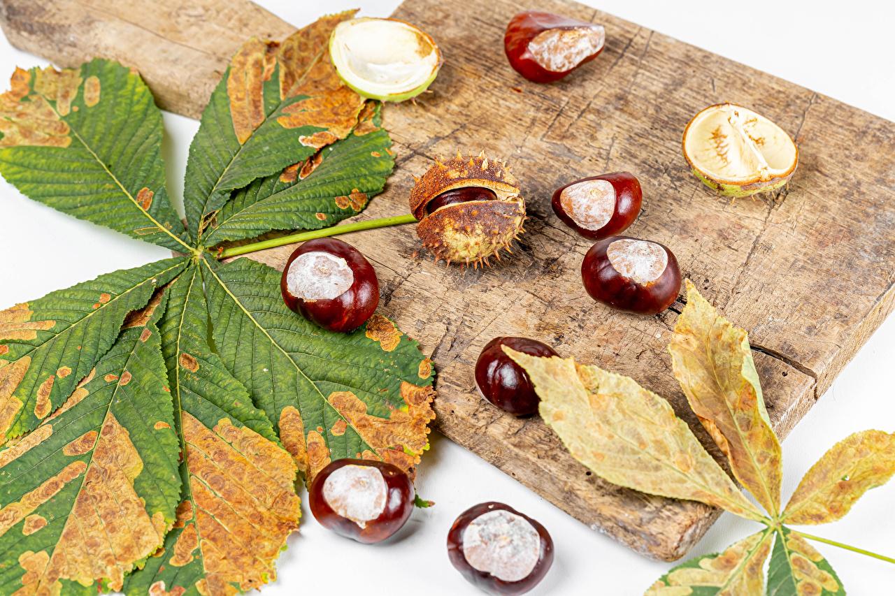 Обои для рабочего стола Каштан Листья осенние Природа Разделочная доска лист Листва Осень разделочной доске