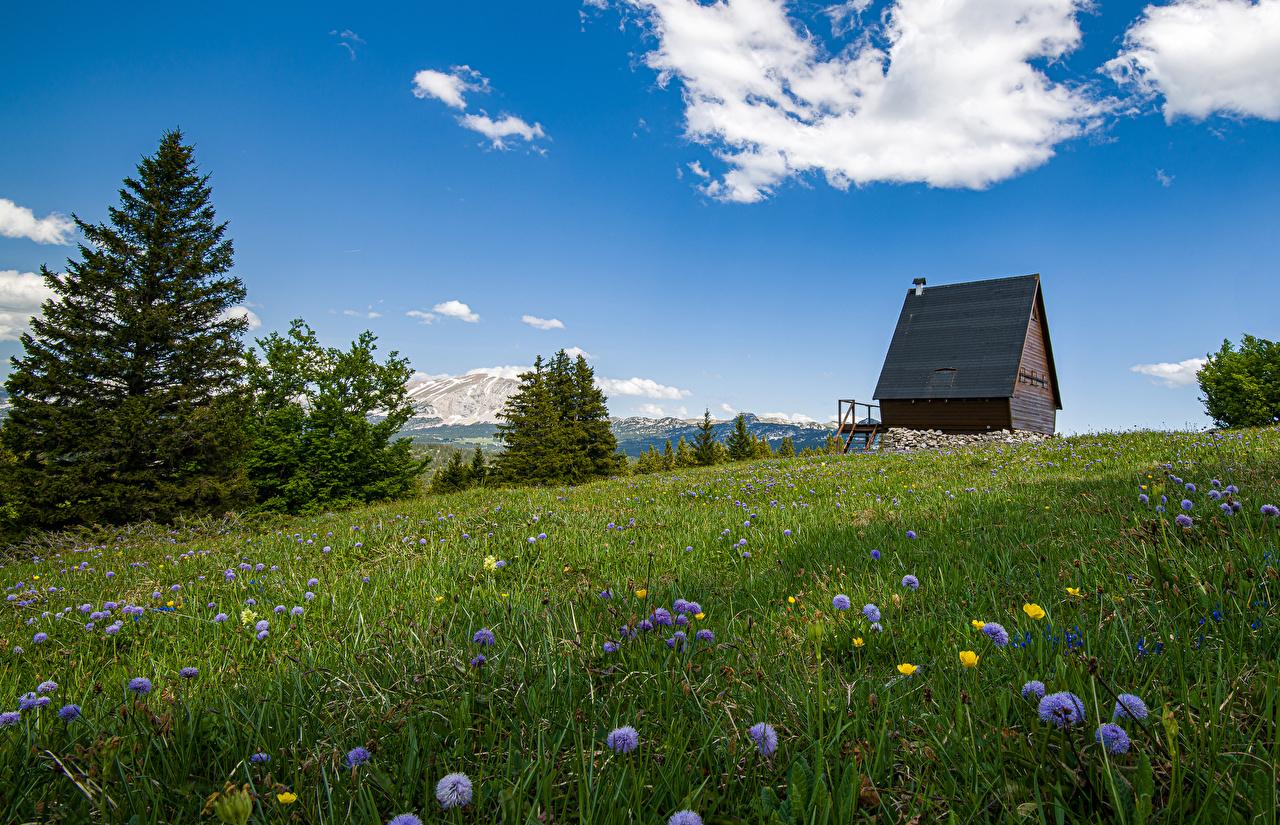Картинки альп Швейцария Ель Природа Луга траве Васильки Здания Альпы ели Трава Дома