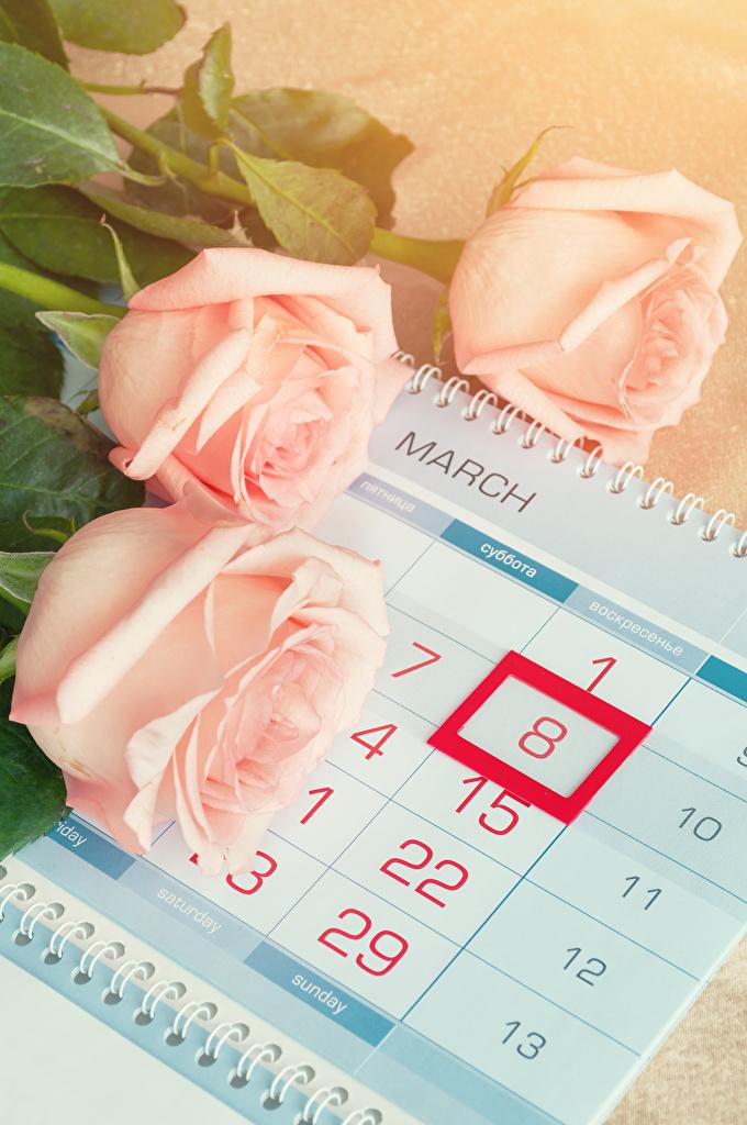 Фотография 8 марта Розы Розовый Календарь Цветы Трое 3 Праздники  для мобильного телефона