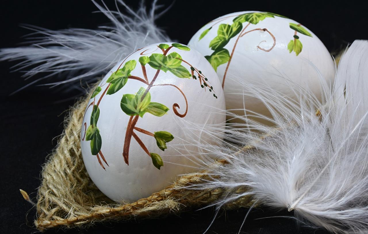 Фото Пасха яйцо Перья Праздники Черный фон яиц Яйца яйцами
