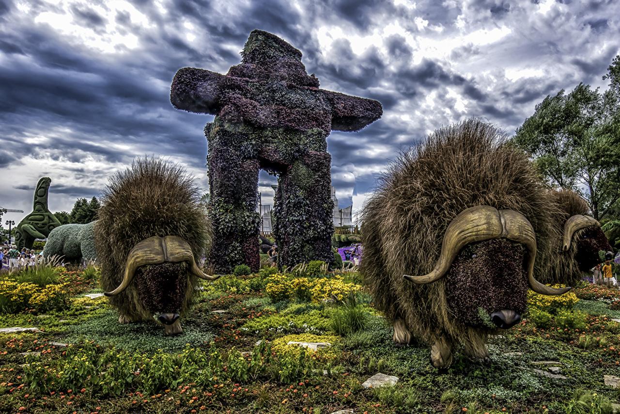 Фотографии Бизон Канада Ottawa Ontario HDRI Природа Парки Дизайн американский бизон HDR