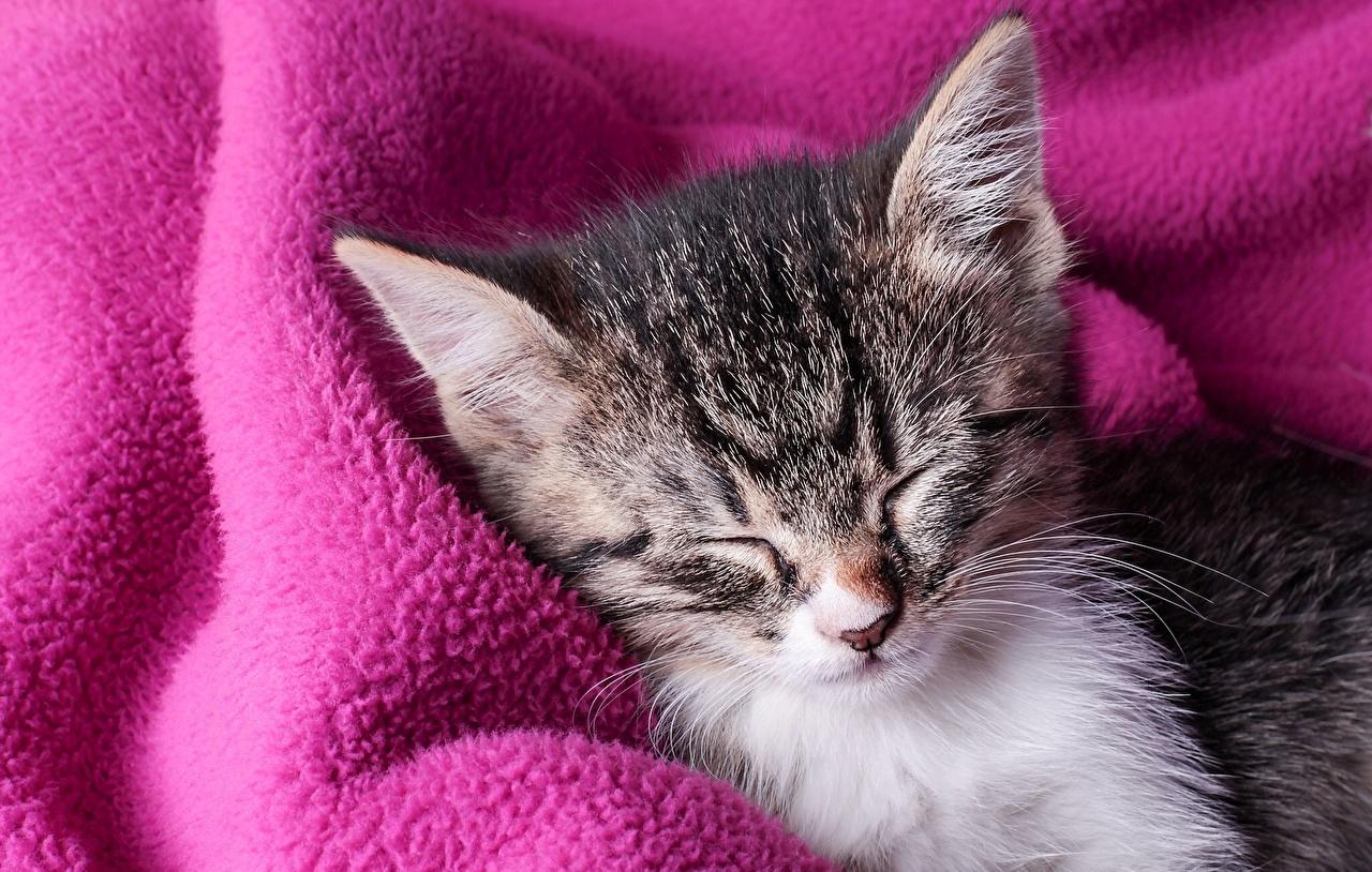 Фото Котята кот спят Животные Крупным планом котят котенок котенка коты кошка Кошки сон Спит спящий вблизи животное