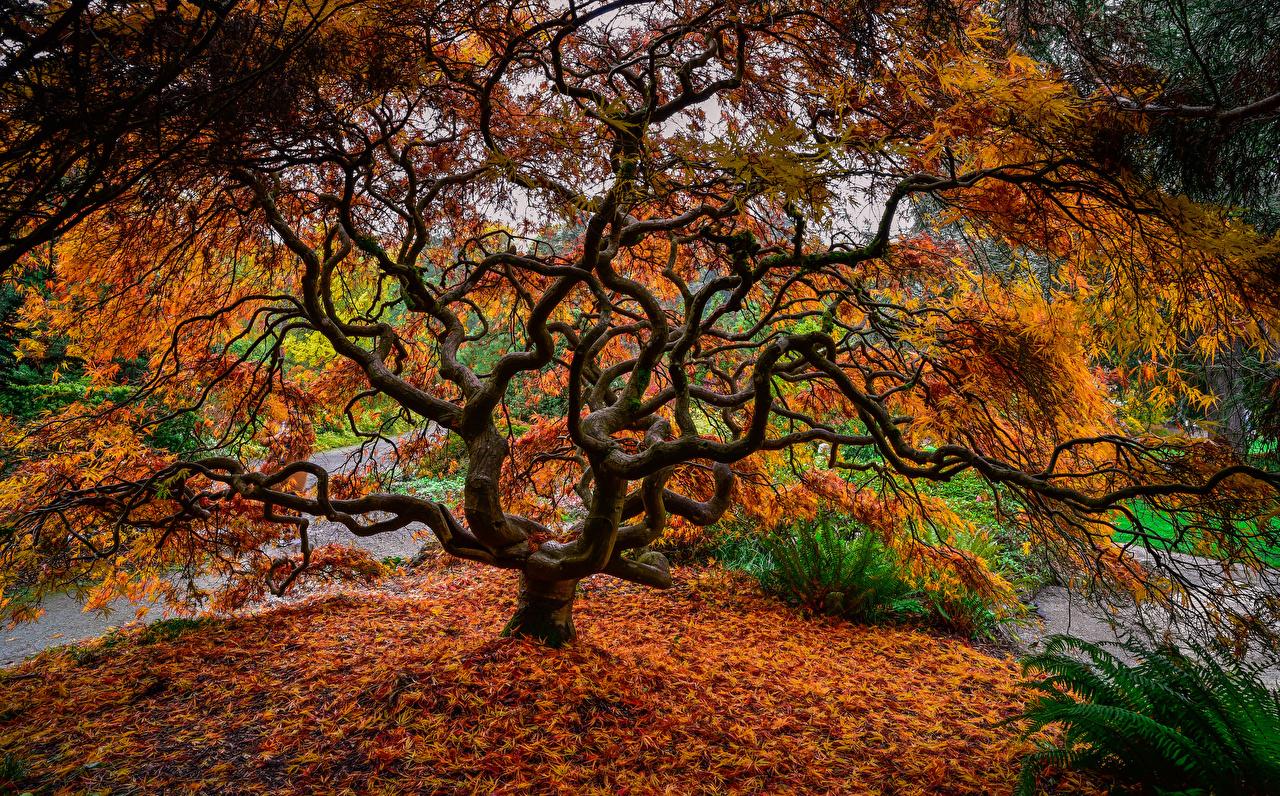 Фотография Листья Природа осенние дерева лист Листва Осень дерево Деревья деревьев