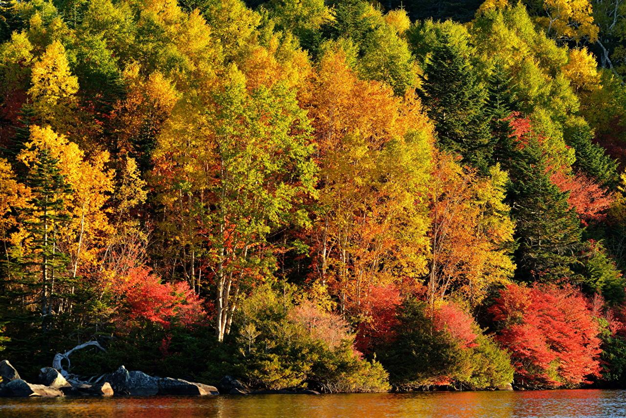 Фотография осенние Природа Леса деревьев Осень лес дерево дерева Деревья