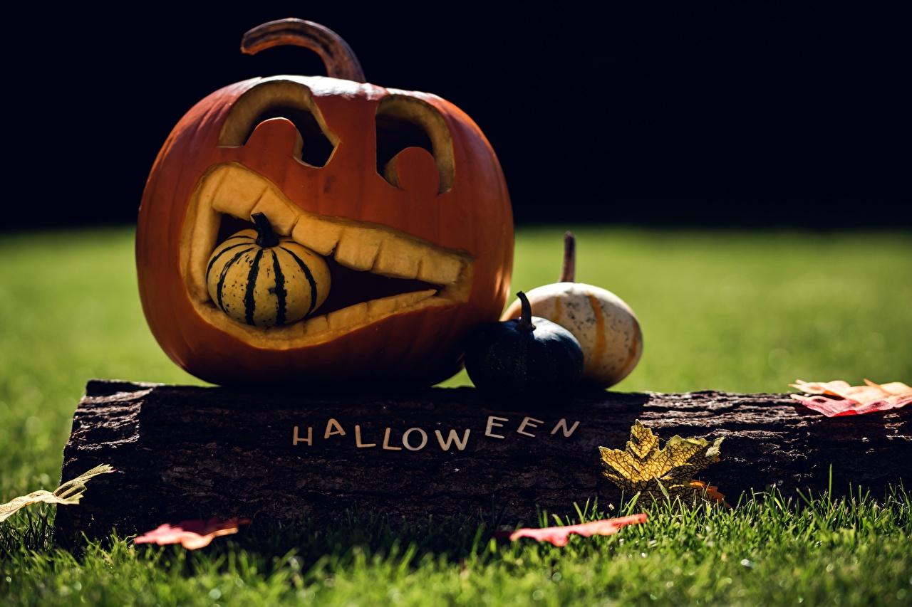 Картинка Листья Тыква Бревна осенние хэллоуин Трава Праздники лист Листва Осень бревно Хеллоуин траве