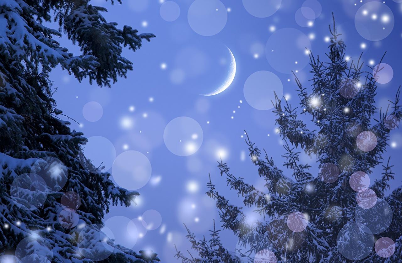 Картинка Ель Зима Природа снежинка луны Небо ветка лунный серп сезон года ели зимние Снежинки Луна луной Ветки ветвь на ветке Полумесяц Времена года