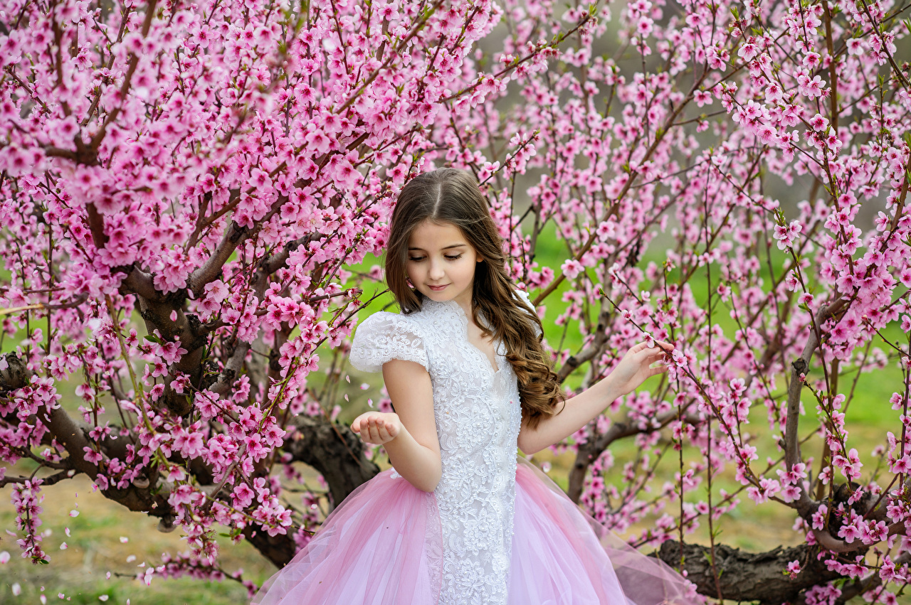 Фото Девочки ребёнок весенние Платье Цветущие деревья девочка Дети Весна платья