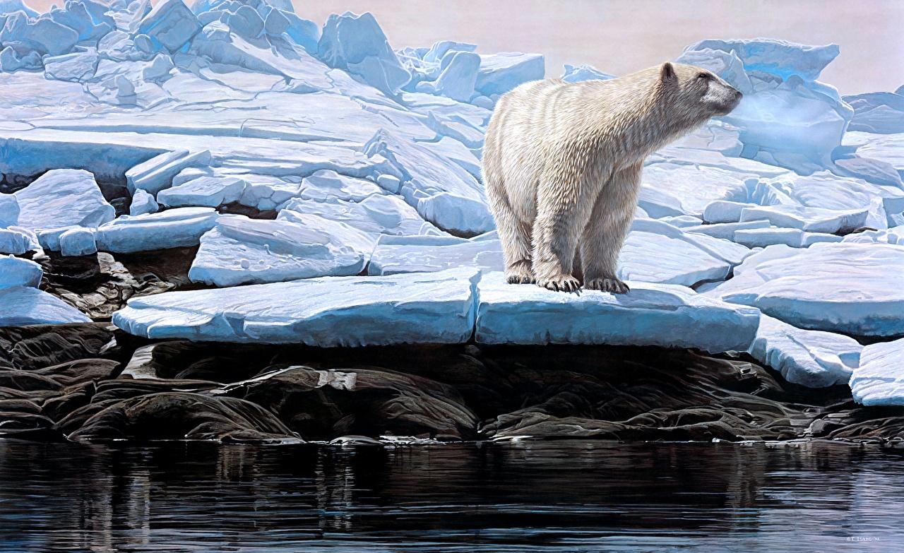 Картинка полярный медведь Вода Животные Рисованные северный Белые Медведи Медведи воде животное