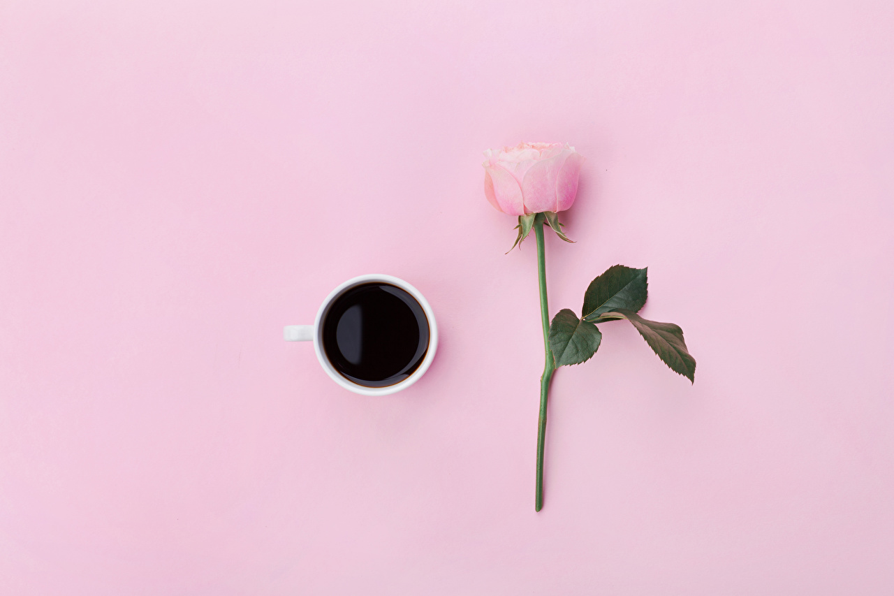Картинки Кофе роза розовая Цветы Чашка Продукты питания Цветной фон Розы розовых Розовый розовые цветок Еда Пища чашке
