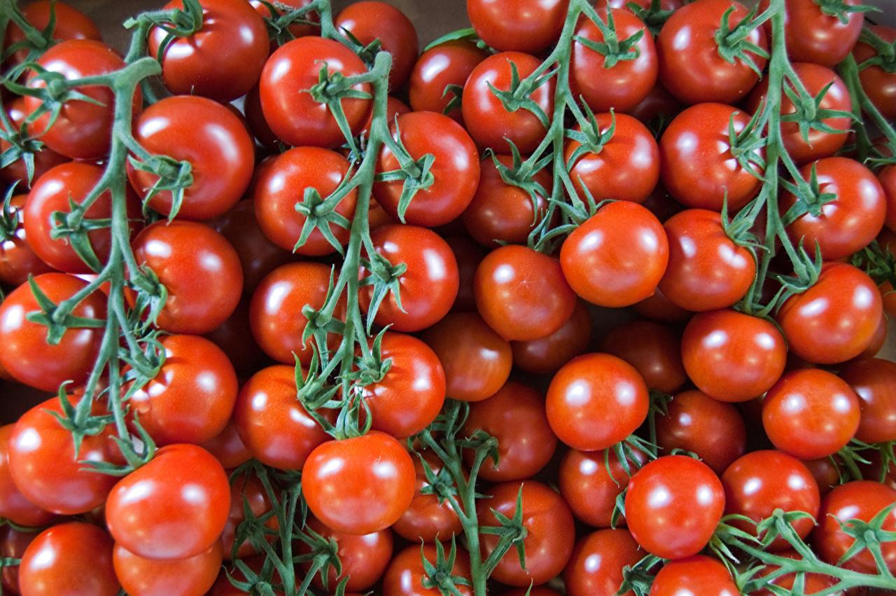 Фото Помидоры Пища Много Томаты Еда Продукты питания