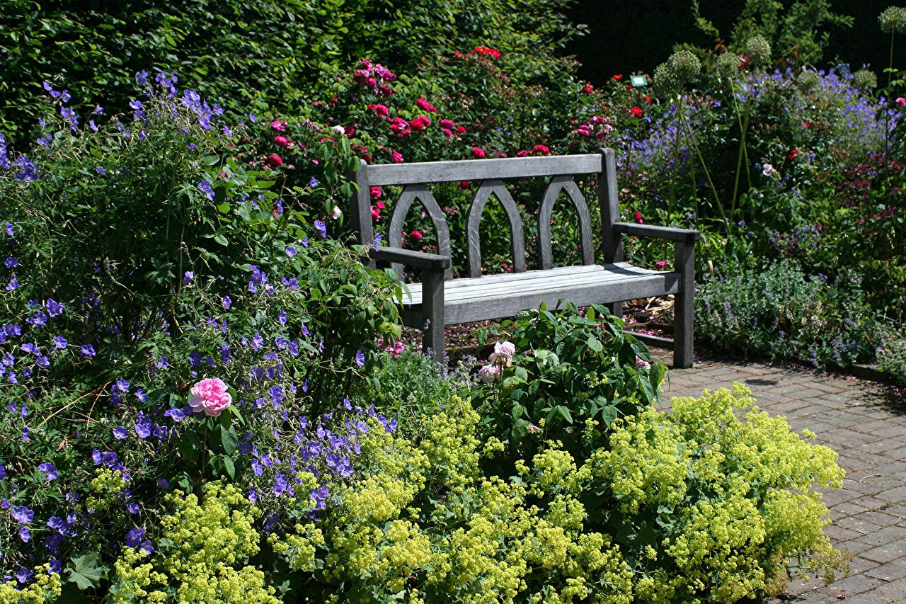 Фото Великобритания Rosemoor Gardens Природа Сады Скамья Кусты Скамейка кустов
