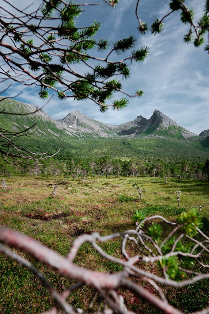 Фотография Норвегия Northern Norway гора Природа Леса Ветки Трава  для мобильного телефона Горы лес ветвь ветка траве на ветке